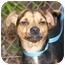Photo 3 - Chihuahua Mix Dog for adoption in El Cajon, California - Bugsy