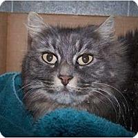 Adopt A Pet :: K.T. - Quilcene, WA