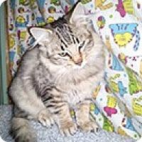 Adopt A Pet :: Leo - Anchorage, AK