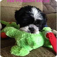 Adopt A Pet :: Zen - Oceanside, CA