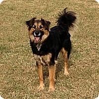 Adopt A Pet :: Bebe - Dacula, GA