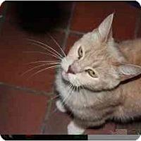 Adopt A Pet :: Peaches - Owasso, OK