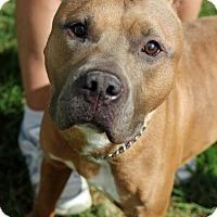 Adopt A Pet :: James - Tinton Falls, NJ