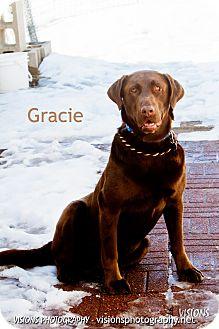 Labrador Retriever Dog for adoption in Lisbon, Iowa - Gracie