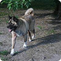 Adopt A Pet :: Brock - Virginia Beach, VA