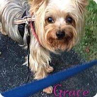 Adopt A Pet :: Grace - House Springs, MO