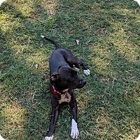 Adopt A Pet :: Rita - Hagerstown, MD