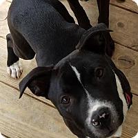 Adopt A Pet :: Buster - North Brunswick, NJ