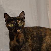 Adopt A Pet :: Victoria - Daleville, AL