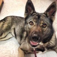 Adopt A Pet :: Thea - Greensboro, NC