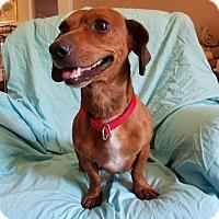 Adopt A Pet :: Oliver (has been adopted) - Burlington, VT