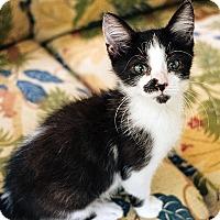 Adopt A Pet :: Oliver - Durham, NC