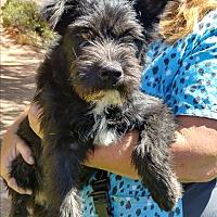 Adopt A Pet :: Maebel - Ogden, UT