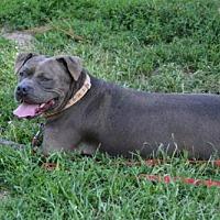 Adopt A Pet :: Fiona - Lacon, IL