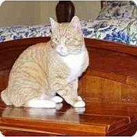 Adopt A Pet :: Rigby - Greenville, SC