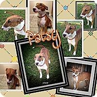 Adopt A Pet :: Patsy - Sachse, TX