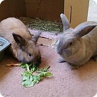 Adopt A Pet :: Julian and Dollie - Williston, FL