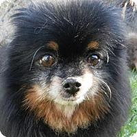 Adopt A Pet :: Macho - Orange, CA