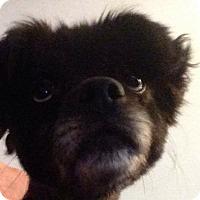 Adopt A Pet :: Roxy - Greensboro, MD