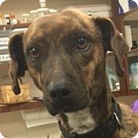 Adopt A Pet :: Polly - Cross Roads, TX