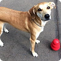 Adopt A Pet :: Neysa in CT - Manchester, CT