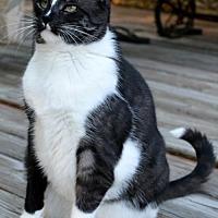 Adopt A Pet :: Tippi (aka Tippitina) - Horn Lake, MS