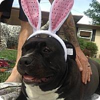 Adopt A Pet :: Penny - Valley Village, CA
