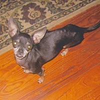 Adopt A Pet :: Sassy - Poplarville,, MS