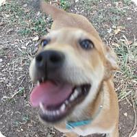 Adopt A Pet :: Jester - Olympia, WA