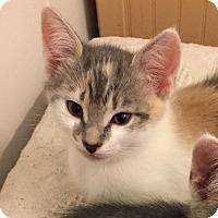 Adopt A Pet :: Nora - Mount Pleasant, SC