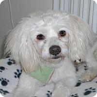 Adopt A Pet :: Dewey - Newell, IA