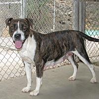 Adopt A Pet :: Mona - Ruidoso, NM