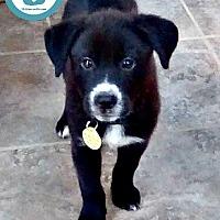 Adopt A Pet :: Gerry - Kimberton, PA