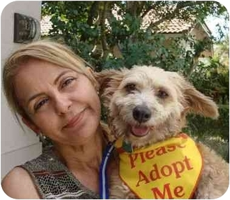 Wheaten Terrier Mix Dog for adoption in Coral Springs, Florida - CoCo