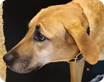 Labrador Retriever Mix Dog for adoption in West Des Moines, Iowa - Sandi