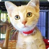 Adopt A Pet :: Seneca - Shelton, WA