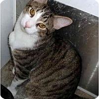 Adopt A Pet :: Taz - Greenville, SC