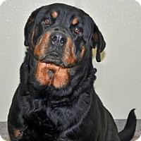 Adopt A Pet :: Princess - Port Washington, NY