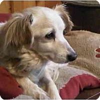 Adopt A Pet :: Samone - Pending - Vancouver, BC
