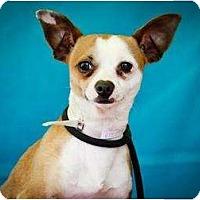 Adopt A Pet :: Lucky - Poway, CA