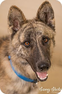 Shepherd (Unknown Type) Mix Dog for adoption in Greensburg, Pennsylvania - Buster