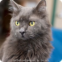 Adopt A Pet :: Winston - Fountain Hills, AZ