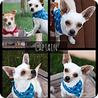 Adopt A Pet :: Captain - West Richland, WA