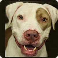 Adopt A Pet :: Ninja - Bellevue, WA