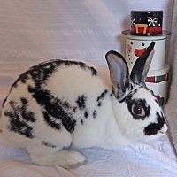 Adopt A Pet :: Helen - Alexandria, VA
