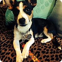 Adopt A Pet :: Petey - Santa Monica, CA
