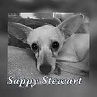 Adopt A Pet :: Sappy Stewart - Reno, NV