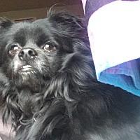 Adopt A Pet :: Olaf - Breinigsville, PA