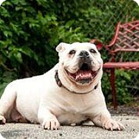 Adopt A Pet :: Cinderella 2 - FEE SPONSORED BY BARKWORTHIES! - Chicago, IL