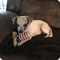 Adopt A Pet :: Tippy - Oakland, FL